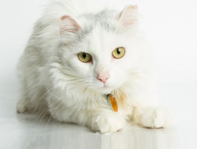 Pet Stewardship FAQ