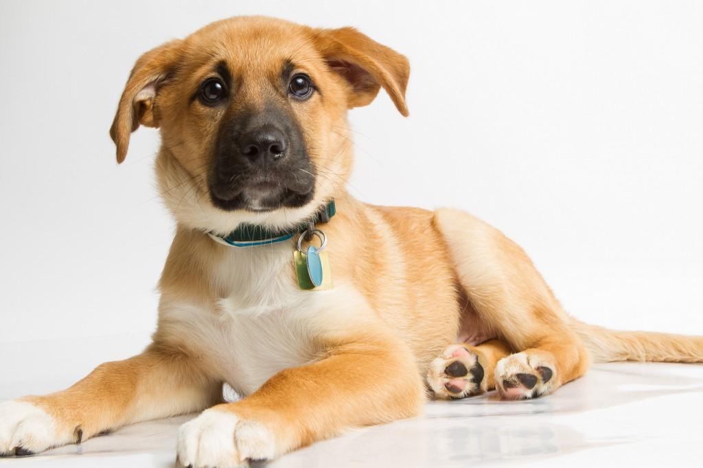 Dog Obedience - Ottawa Humane Society