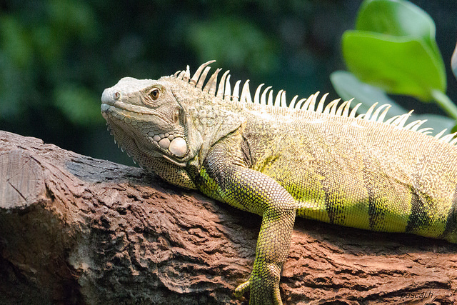 Reptiles as Pets: Dispelling Common Myths and ... 10 Examples Of Reptiles