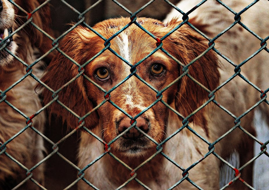 Might Saving Dogs In Korea Kill Yours Ottawa Humane Society