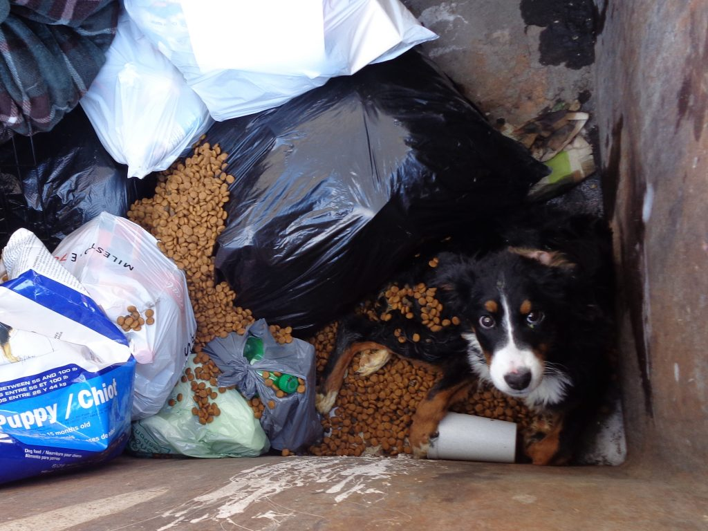 A  dog trapped in a dumpster.