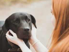 Woman holding a sad dog's face