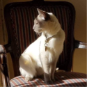 Cat sitting on chair looking out a window